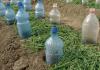 Капельный полив из пластиковых бутылок: особенности применения и наиболее простые схемы устройства