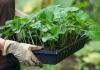 Правила и особенности удобрения для огурцов в теплице