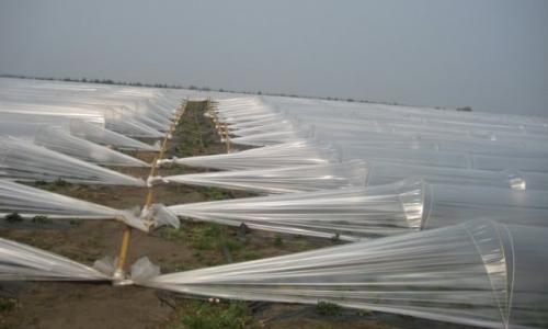 Раскрываем особенности выращивания клубники в теплице на всех этапах