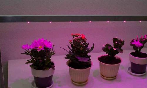 Какие бывают светодиоды для растений