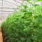 Как вырастить отличный урожай огурцов в теплице