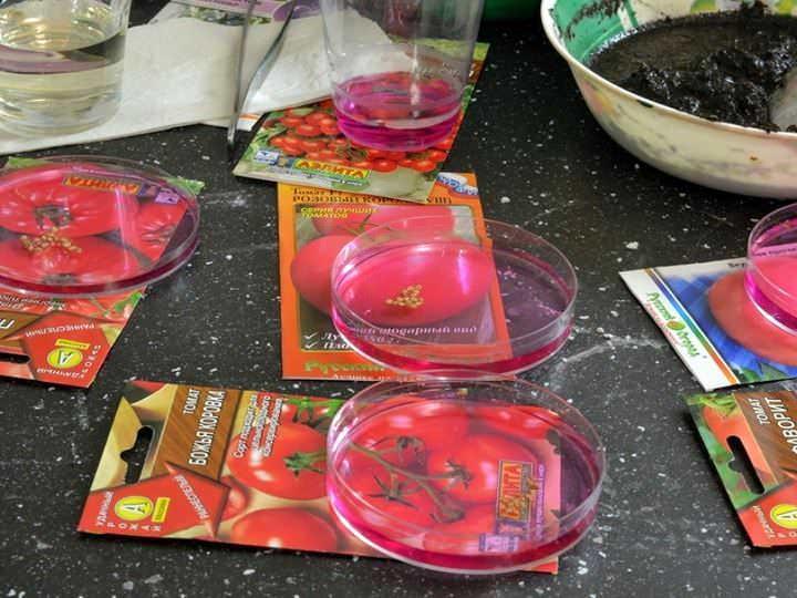 Если планируется высаживать несколько сортов томатов, семена лучше замачивать в разных емкостях с раствором марганца