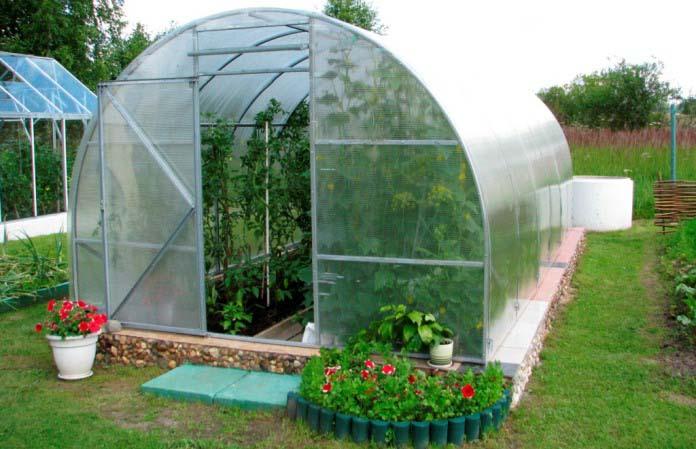 Необходимо проветривать теплицу, чтобы не допустить жирование томатов