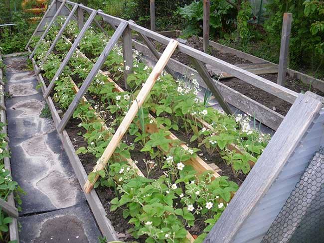 Внимательно следите за температурой воздуха и влажностью почвы. Чрезмерные поливы при холодной погоде могут погубить растения