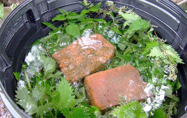 Еще одно удобрение, которое дает хороший эффект, готовится просто: ведро воды на ведро крапивы. Смесь следует выдержать несколько дней, после чего можно использовать