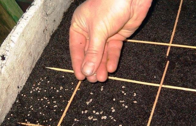 Семена помидор на рассаду высевают, в зависимости от скороспелости сорта или сроков цветения