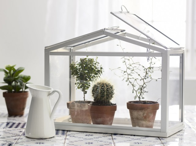 Мини-теплицы на подоконнике позволяют выращивать растения и рассаду зимой, когда на улице лютует мороз