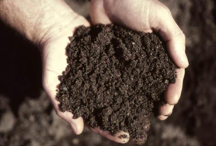 Для выращивания зелени необходима очень хорошая почвенная смесь