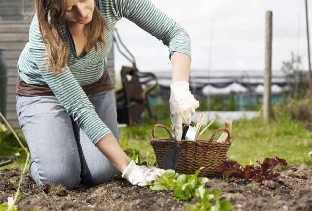 Какие культуры выращивают перед началом осени?