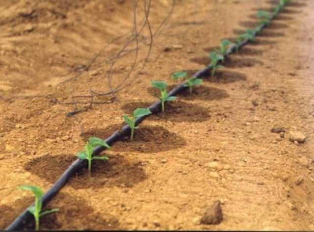 Так как вода имеет большое значение для растений, относиться к ней нужно с бережливостью