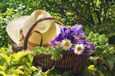 В июне основной объем работ составляют посевы и высадка рассадного материала на гряды