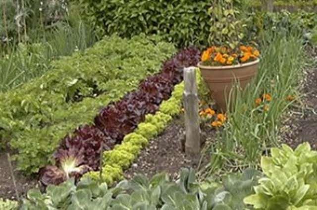 Совместимость растений зависит и от их отношения к теплу