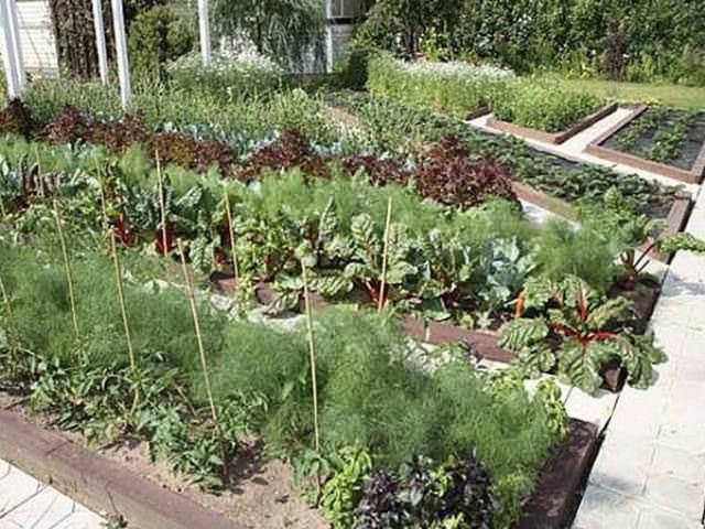Почему важно знать совместимость растений? Потому что только если есть столь важные знания, Вы сможете правильно посадить культуры в парнике и впоследствии наслаждаться хорошим урожаем