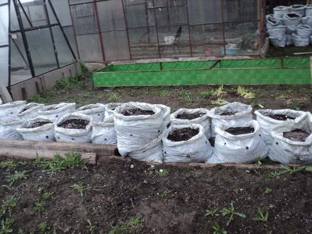 Готовый компост раскладывают по мешкам или ящикам