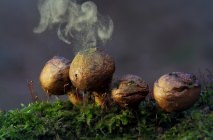 Mushroom-raincoat1