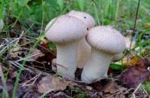 Mushroom-raincoat11
