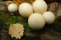 Mushroom-raincoat6