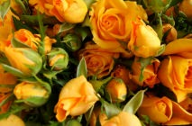 yellow-roses19