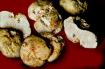 truffle4