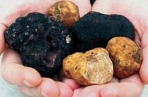 truffle8