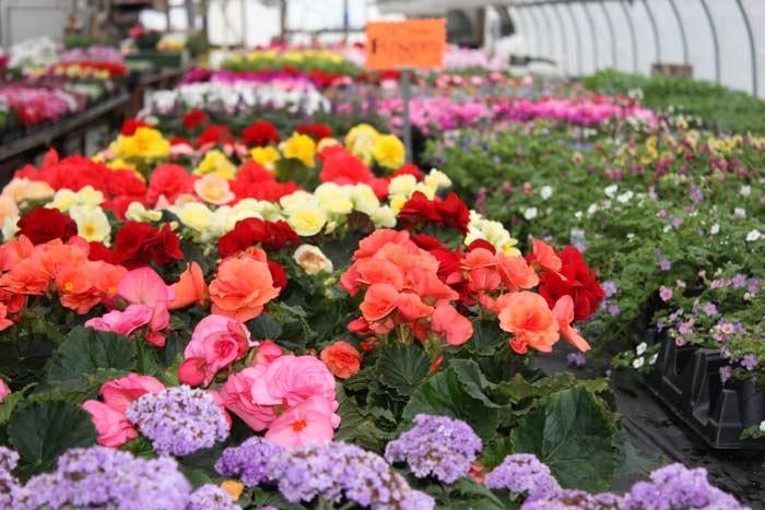 Мало просто составить бизнес-план и вырастить цветы в теплице, их еще нужно выгодно продать. Оптимальный вариант – собственная торговая точка