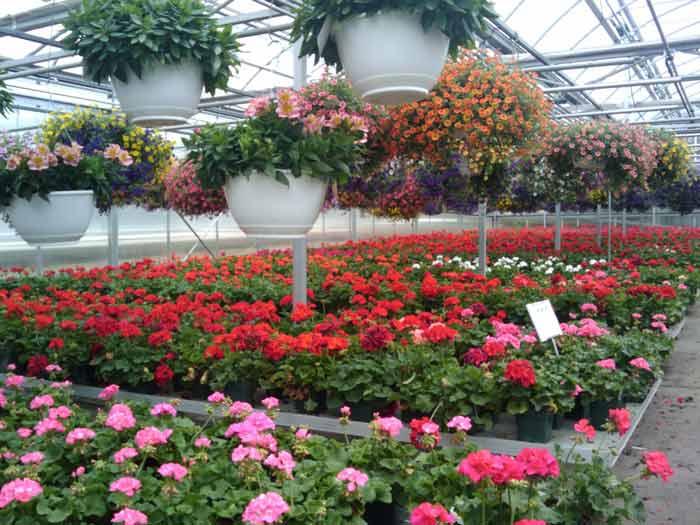 Бизнес по выращиванию цветов может приносить неплохой доход