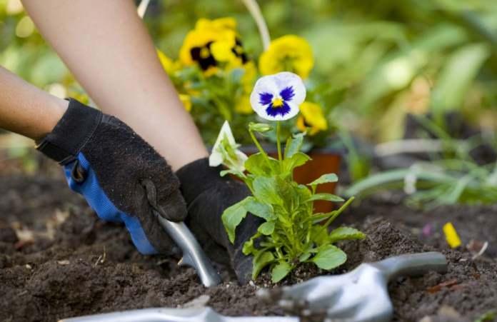В первых числах августа наступает самое благоприятное время для посадки цветущих растений