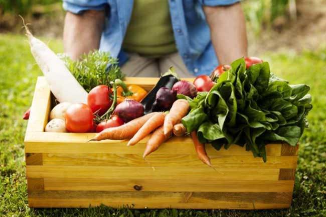 В первых числах июня следует провести высадку овощей на гряды открытого грунта