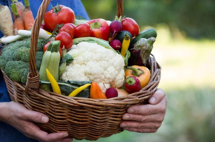 В последний летний месяц проводится сбор урожая овощей