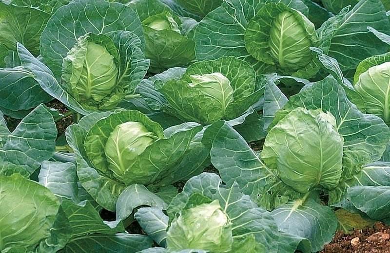Чтобы дать хороший урожай, растения должны вырасти крепкими и здоровыми