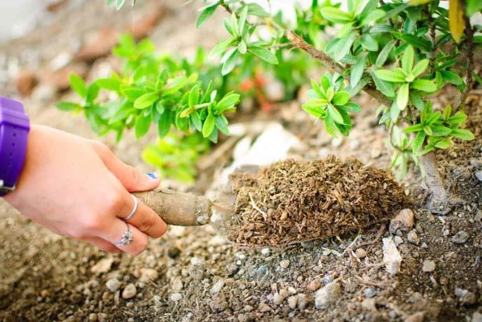 Корневая подкормка растений – наиболее распространенный вариант проведения подкормок в тепличных условиях