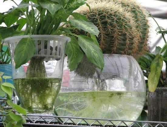 Фитильную систему  для гидропоники рекомендовано применять для декоративных растений с медленным ростом