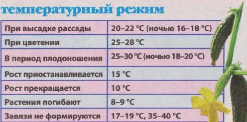 Огурцы плохо реагируют даже на незначительные температурные перепады, а особый вред этим «неженкам» могут нанести поздние или возвратные заморозки