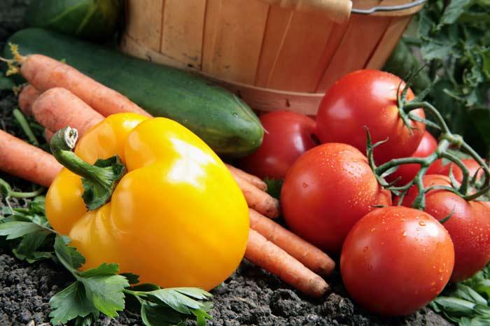 При грамотном подходе к работе можно обеспечить себя витаминами кргулый год