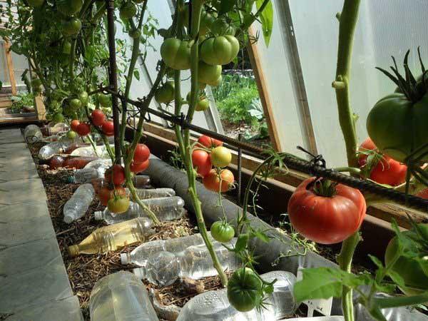 Применение пластиковых бутылок на даче для полива
