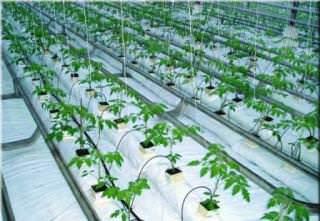 Созданный как средство для радикального повышения урожайности культур в регионах с дефицитом воды (Ближний Восток), капельный полив со временем стал популярен во всех климатических зонах