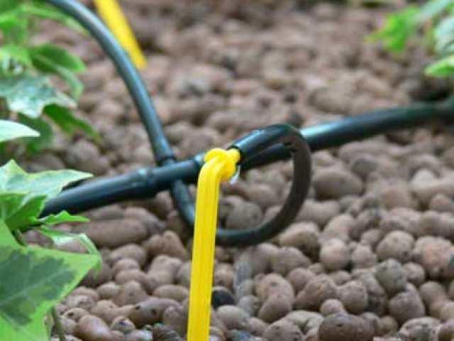 Вариант систем с индивидуальными капельницами применяется в теплицах, где выращиваются различные культуры, нуждающиеся в разных объемах воды для полива