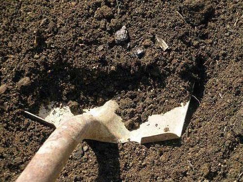 В тех теплицах, где был замечен фитофтороз, осенью снимается примерно 4 сантиметра грунта