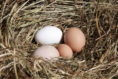 Для кладки яиц требуется много кальция, поэтому нельзя забывать о минералах
