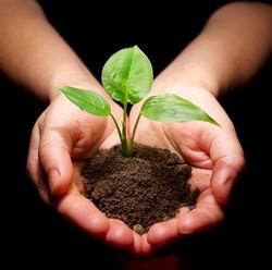 С января по март для огородников и садоводов наступает время для посадки рассады
