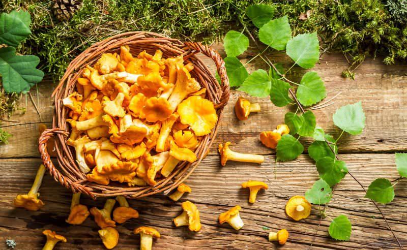 Отличный способ сохранить лисички и другие грибы свежими – заморозить их