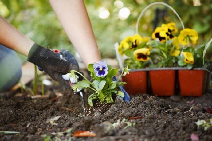 Высаживать можно практически любые цветочные культуры, которые сочетаются по цветовой гамме и высоте надземной части