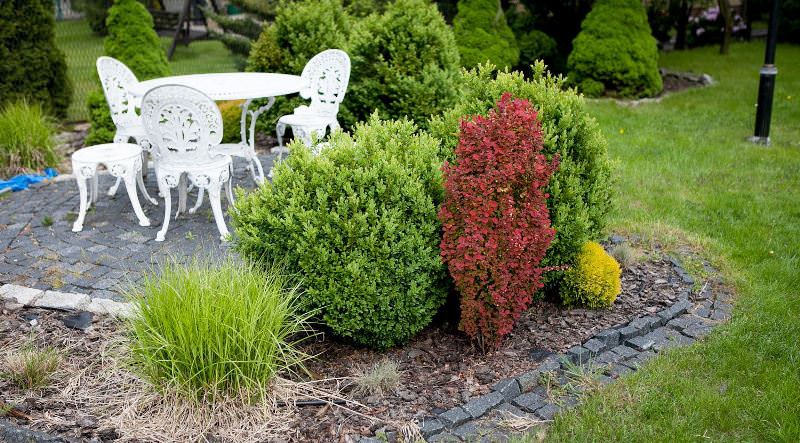Колоновидный кустарник барбарис Тунберга Оранж рокет отличает медленный рост
