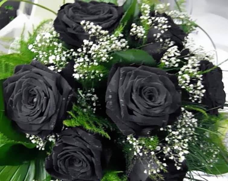 В последнее время букеты из роз черных оттенков все чаще приобретаются совершенно по другим поводам – на удачу или на счастье