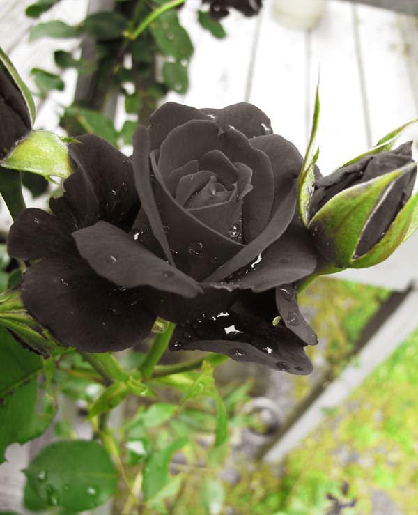 Украшение садового участка в настоящее время приобретает большое значение для цветоводов