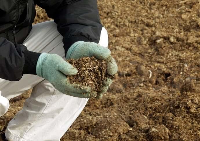 Из органических удобрений наиболее ценными являются навоз и помёт, они повышают плодородие почвы