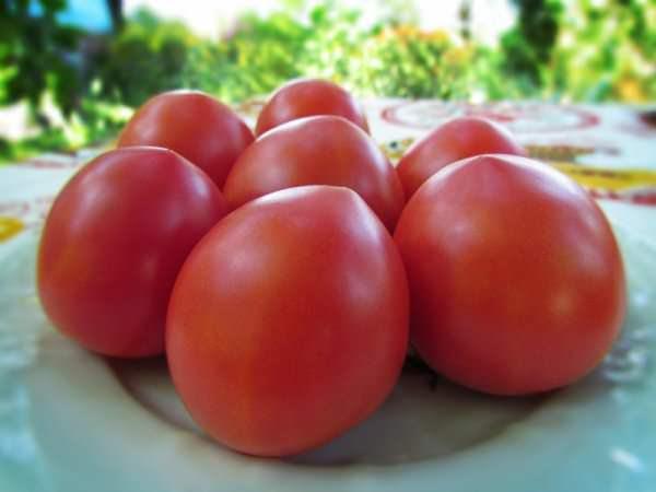 Показатели урожайности у томата сорта Буденовка очень достойные и в среднем составляют порядка 6−8 кг с каждого куста