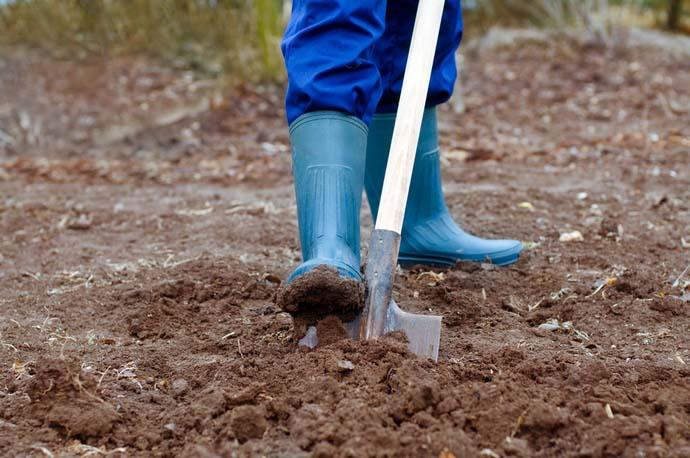 Предпосадочная перекопка почвы должна быть максимально глубокой