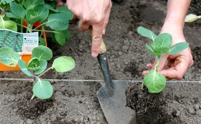 В июне огородники занимаются тем, что они досаживают то, что еще не успели высадить