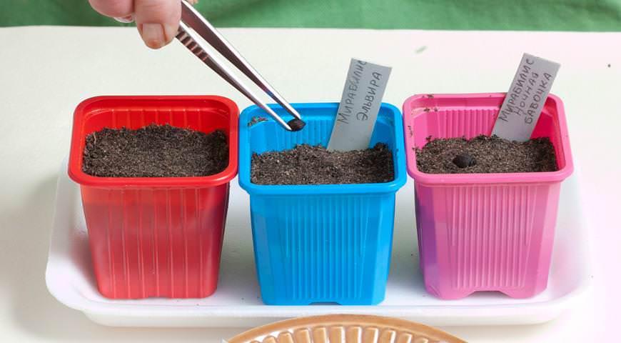 Осуществлять посев растений лучше всего на растущую луну